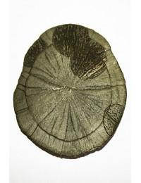 Marcasite/Pyrite